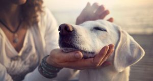 A pet owner is petting their dog's head